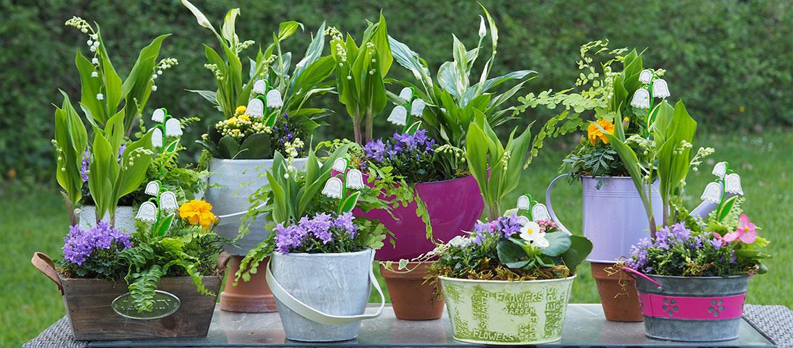 offrez du muguet pour le 1er mai votre fleuriste sur. Black Bedroom Furniture Sets. Home Design Ideas
