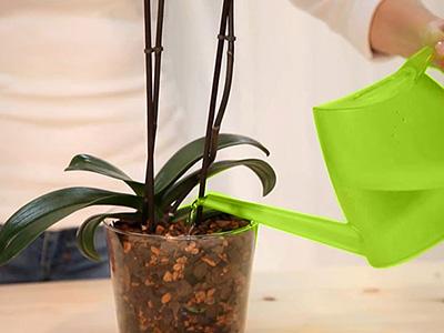 rempoter son orchid e votre fleuriste sur jouques peyrolles rians meyrargues saint paul. Black Bedroom Furniture Sets. Home Design Ideas